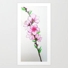 peach blosom Art Print