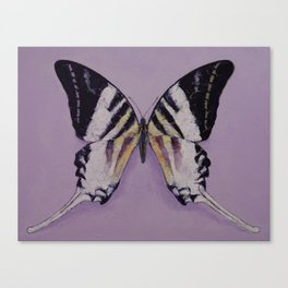 Giant Swordtail Butterfly Canvas Print