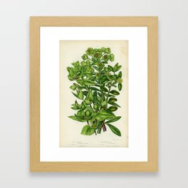 Caper Spurge Framed Art Print