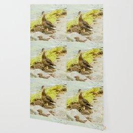 Duck family Wallpaper