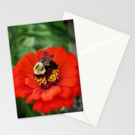 chubby bee on bright red flower Stationery Cards