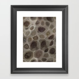 Petoskey Stone Framed Art Print