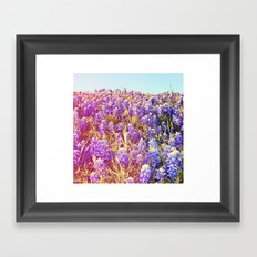 Bluebonnets! Framed Art Print