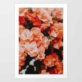 Spring Flowers II Art Print