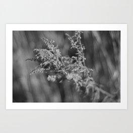 Weed Art Print