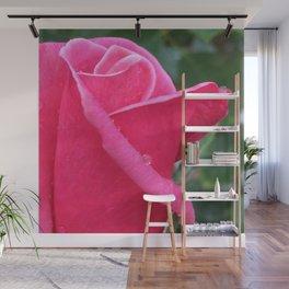 Pink Rosebud in the Rain Wall Mural