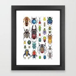 Beetle Collection Framed Art Print