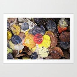 Multicolored Aspen Leaves in Woods Art Print