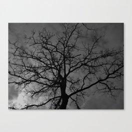 Oak Tree Canopy - Landscape Canvas Print