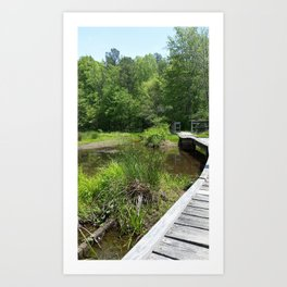 Swampy Path Art Print