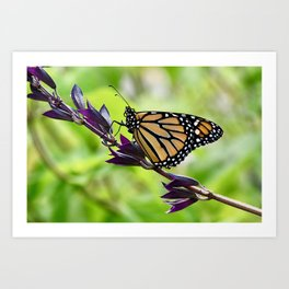 Butterfly on a Branch Art Print