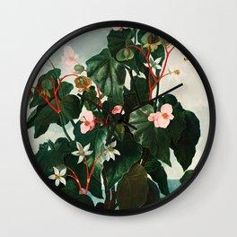 Robert John Thornton - The Oblique–Leaved Begonia Wall Clock