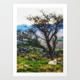 Sheep Under The  Tree Art Print