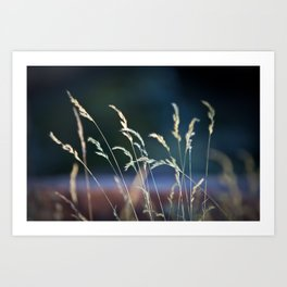 waiting in the weeds Art Print