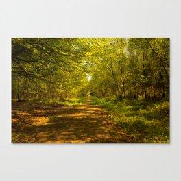 Woodland Views. Canvas Print