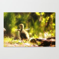 Ready to fly Canvas Print