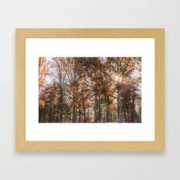 Fall Colors Framed Art Print