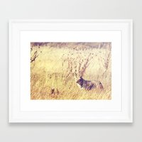coyote Framed Art Prints featuring Coyote  by Shelby Babbert Photography