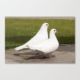 Lovebirds I Valentines day I Romantic vibes I Photography Canvas Print