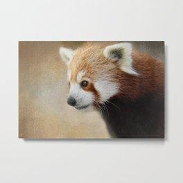 Red Panda Watching - Wildlife Metal Print