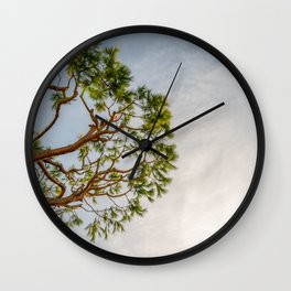 Maritime pine in French Riviera in a sunny winter day Wall Clock