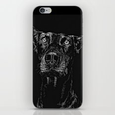 The Curious Expressions of Dogs iPhone & iPod Skin