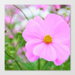 COSMOS -Pink II Canvas Print