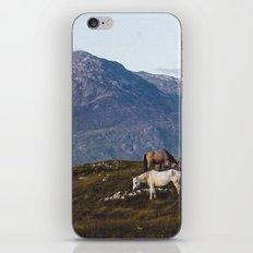 Connemara  - Horse and Mountains iPhone & iPod Skin