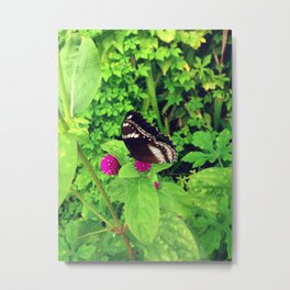 Butterfly & Globe Amaranth Metal Print