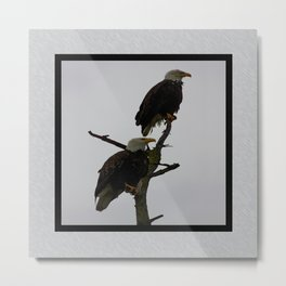 bald eagle pair in the rain (square) Metal Print