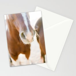 Nosey Stationery Cards