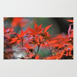 Scarlet Japanese Maple Leaves Rug