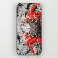 crab iPhone & iPod Skins featuring Crab by Cassidy Marshall