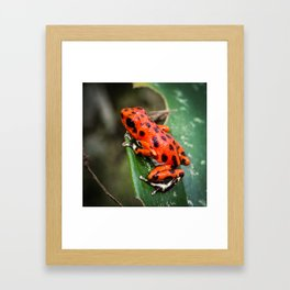 Red Frog Framed Art Print
