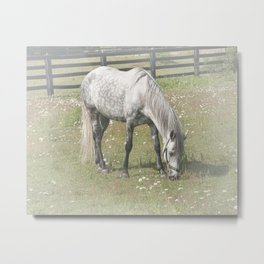 A White Horse in a pasture among Daisy Flowers Metal Print