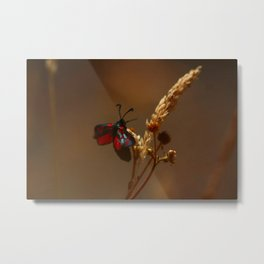 Five spotted burnet moth Metal Print