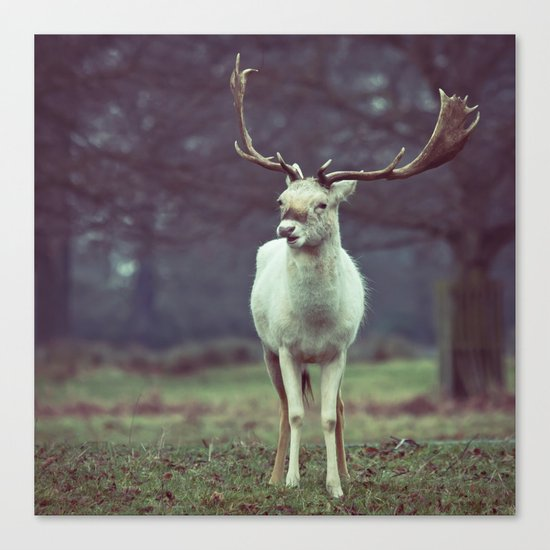 White deer needs your love Canvas Print