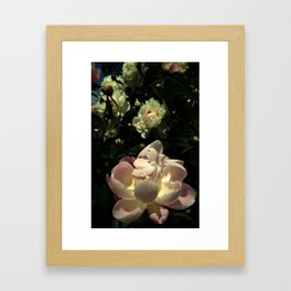 Peony 11 Framed Art Print