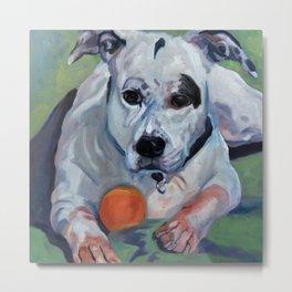 Staffordshire Terrier Dog Portrait Metal Print