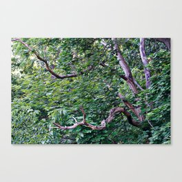 An Old Branch Canvas Print