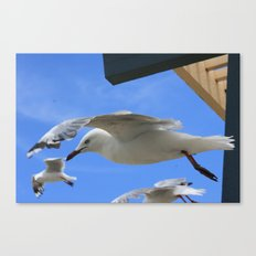 Gull company Canvas Print