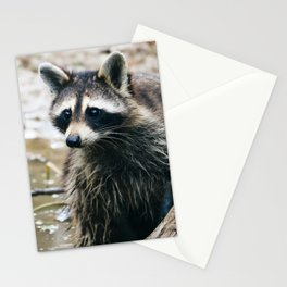 George Cooney Stationery Cards