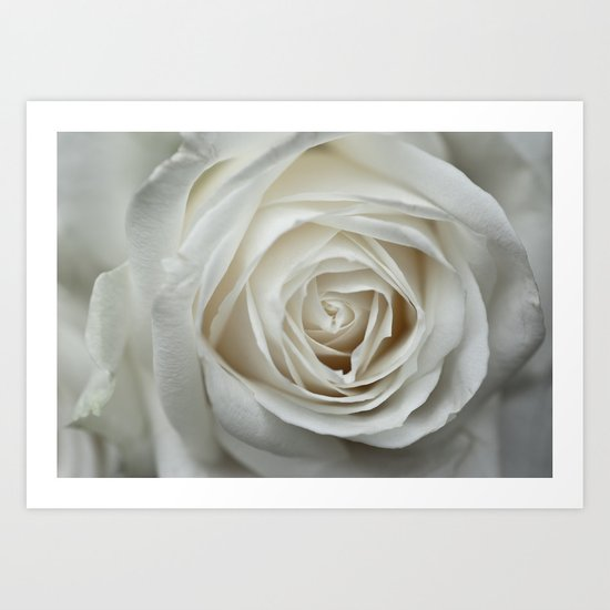 White Rose 9419 Art Print