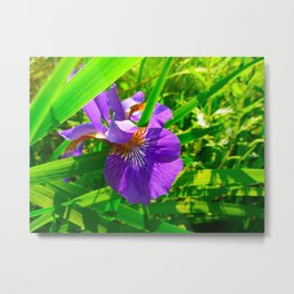 Peeping Purple and Yellow Flower  Metal Print