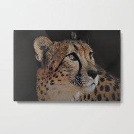 Cheetah Love - Photography Metal Print