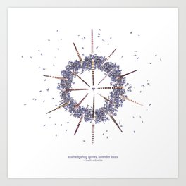 nature mandala... sea hedgehog spines, lavender buds Art Print