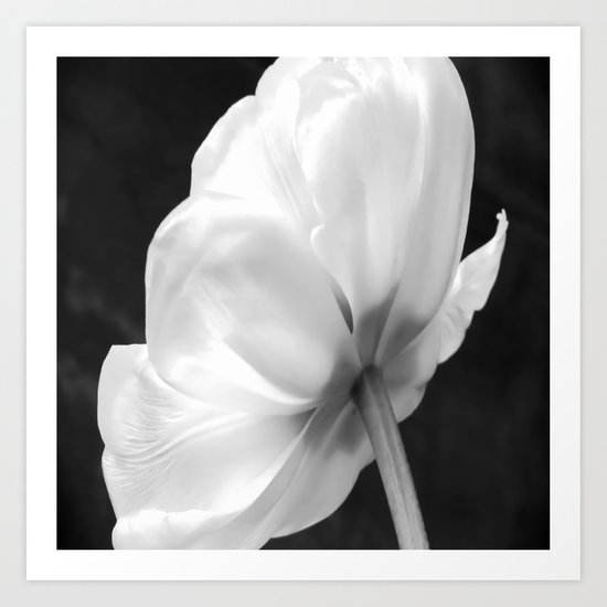 Close-up of white tulip in black background Art Print