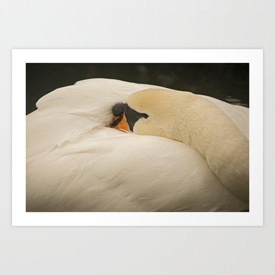 Sleeping Swan Art Print