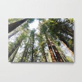 Redwoods Metal Print