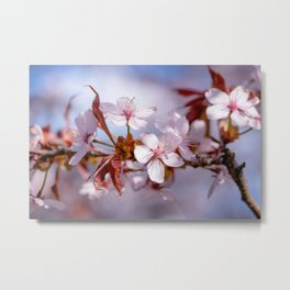 Branch of Sakura flowers Metal Print